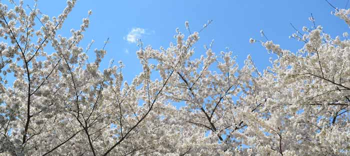 Spring is a wonderful time to enjoy shopping, dining, and the wonderful sights in Easton, Lehigh Valley PA
